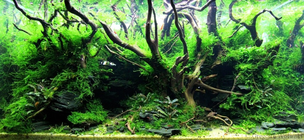 which aquascaping for beginners india