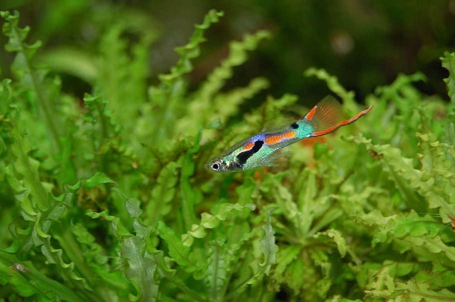 with aquascaping for beginners guide