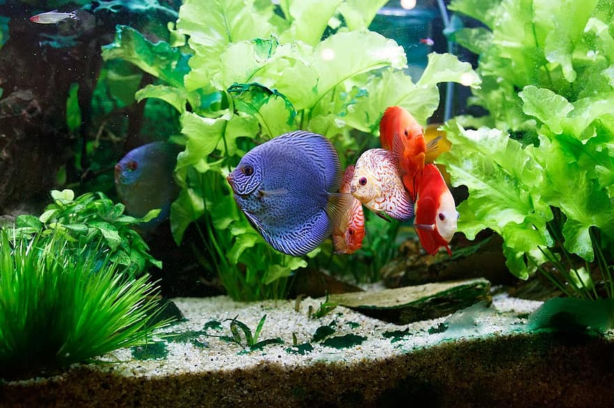 Walstad Method Tank With Discus Fish and Plants