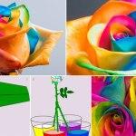 Como Hacer Rosas en Arcoíris