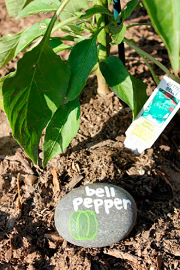 Decorar un huerto e identificar las plantas
