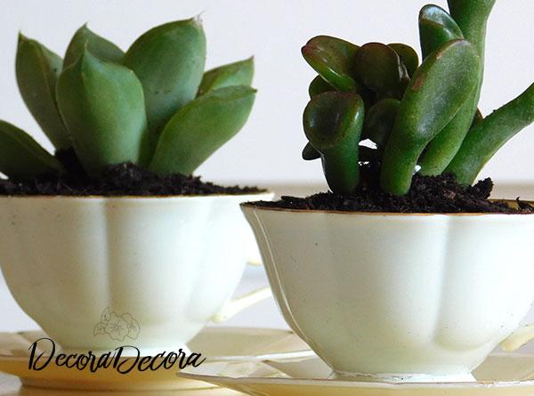 Plantas en tazas