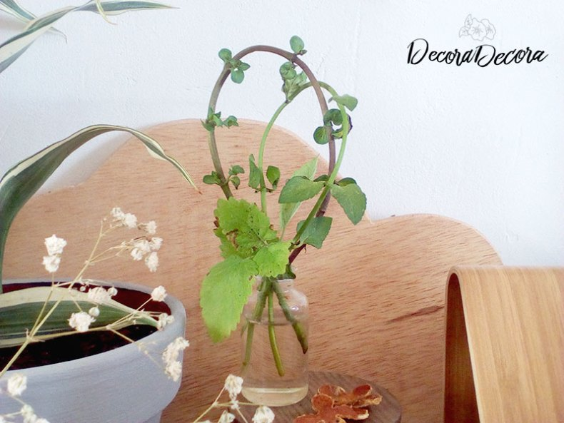 Idea para decorar con menta