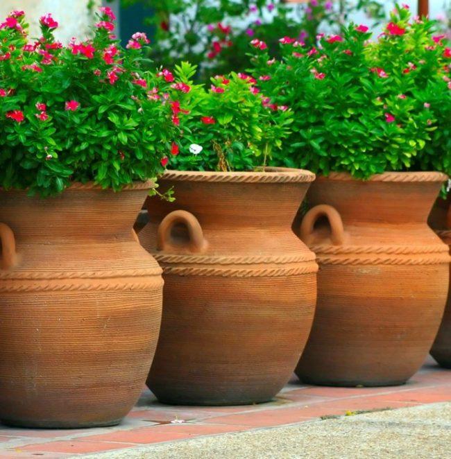 Giant Flower Pots