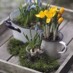 bulbs in enamel pots, from thegarden-collection.com