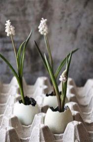 white grape hyacinths in eggs