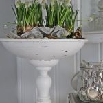 Hyaynths in footed bowl