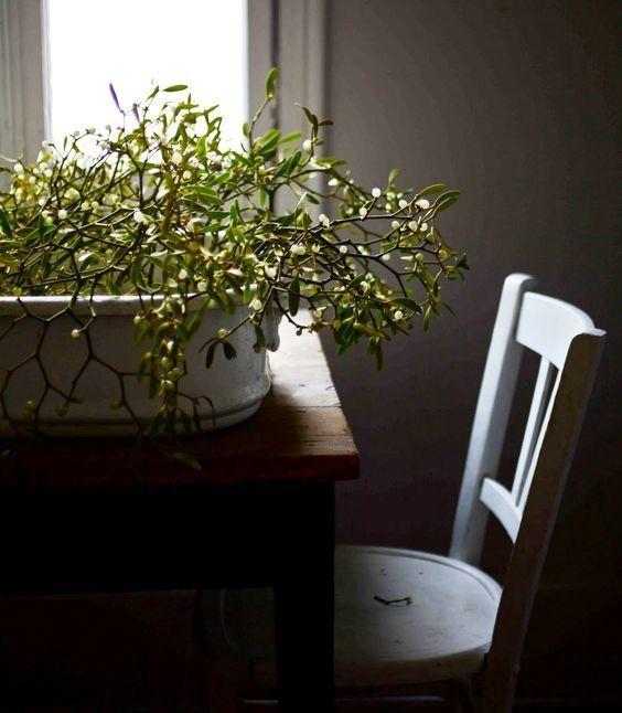 Plantas de navidad - acebo