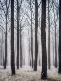 decoralinks | bosque - fotografia de @botikario