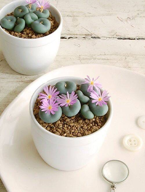 decoralinks | lithops