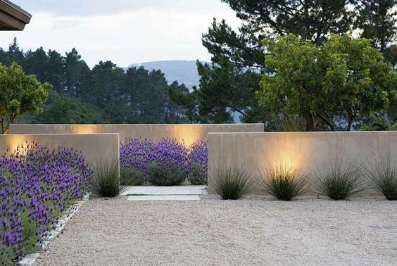 decoralinks | plantas de exterior - lavanda