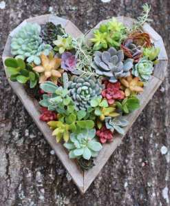 BEST SUCCULENT GARDEN DESIGN IDEAS 129