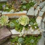 BEST SUCCULENT GARDEN DESIGN IDEAS 48