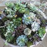 BEST SUCCULENT GARDEN DESIGN IDEAS 69