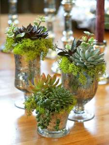 BEST SUCCULENT GARDEN DESIGN IDEAS 75