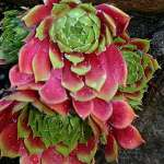 BEST SUCCULENT GARDEN DESIGN IDEAS 77