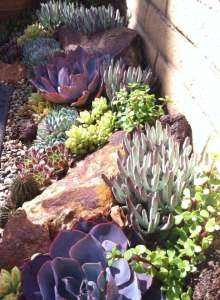 BEST SUCCULENT GARDEN DESIGN IDEAS 88