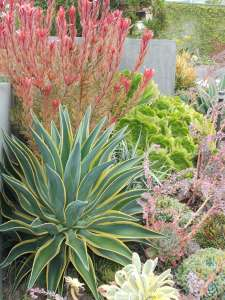 BEST SUCCULENT GARDEN DESIGN IDEAS 91