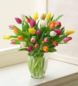 Tulips In Vase 13