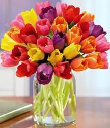 Tulips In Vase 48