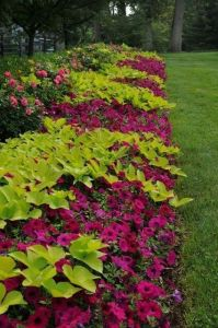 Flower Beds In Front Of House 125