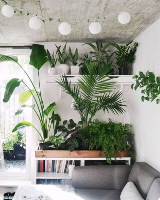 Indoor Plants 11
