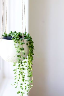 Indoor Plants 13