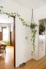 Indoor Plants 16