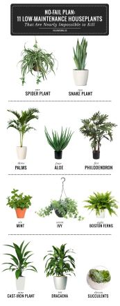 Indoor Plants 20