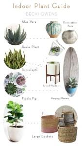 Indoor Plants 21