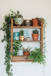 Indoor Plants 22