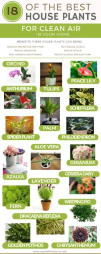 Indoor Plants 40
