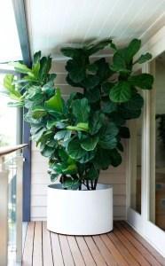 Indoor Plants 46