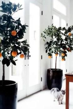 Indoor Plants 50