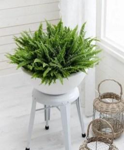 Indoor Plants 63
