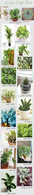 Indoor Plants 64