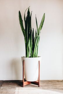 Indoor Plants 68