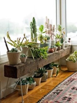 Indoor Plants 69