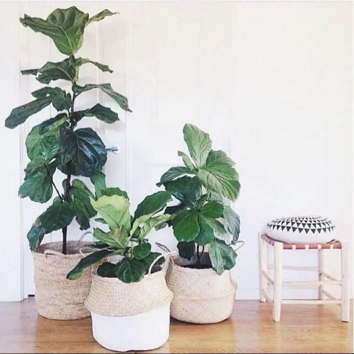 Indoor Plants 7