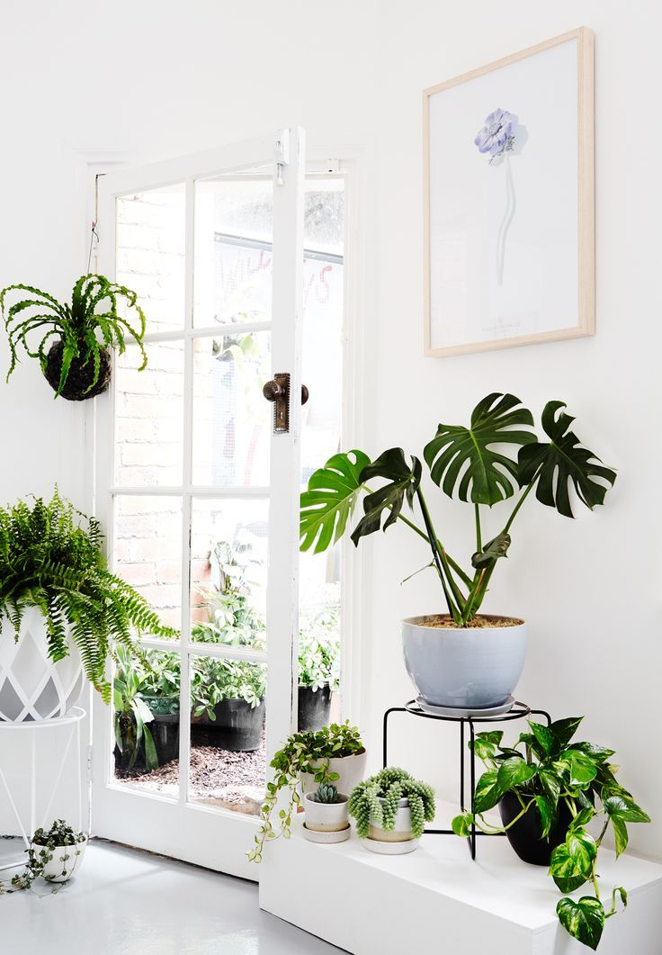 Indoor Plants 8