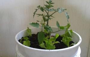 Container Gardening 17