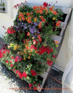 Container Gardening 18