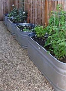 Container Gardening 26