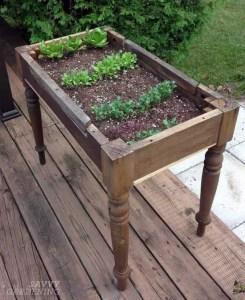 Container Gardening 54