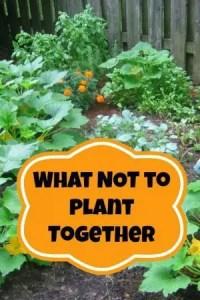 Container Gardening 71