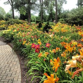 Daylily Garden 80