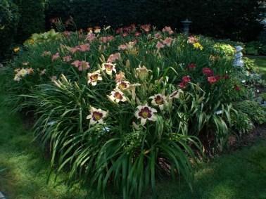 Daylily Garden 83