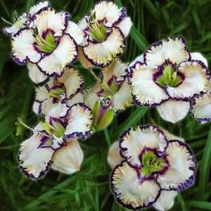 Daylily Garden 9
