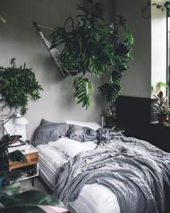 Indoor Plants 103