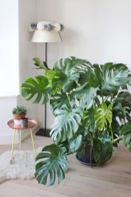 Indoor Plants 105